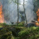 Forest around the world are burning! What could I do?! Here are 8 quick tips!