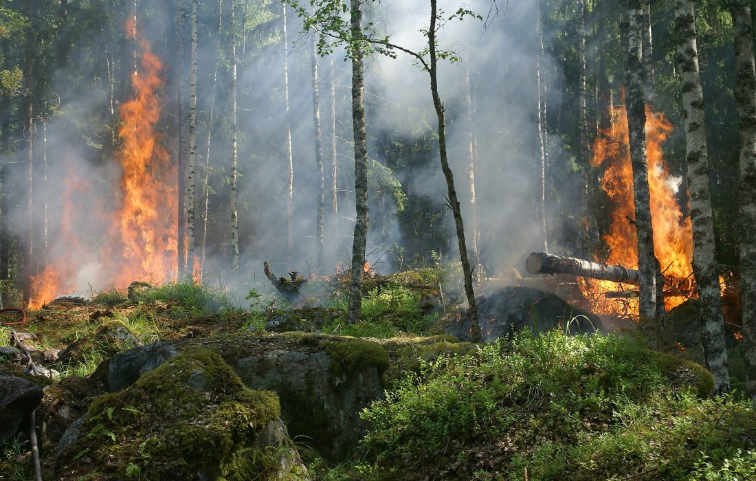 forest-fire-432870_1920 (1)